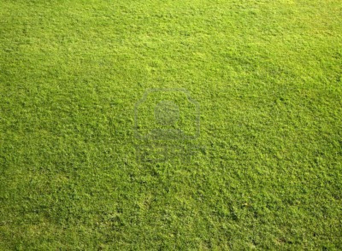 Low maintenance gardens accent garden designs for Best low maintenance grass